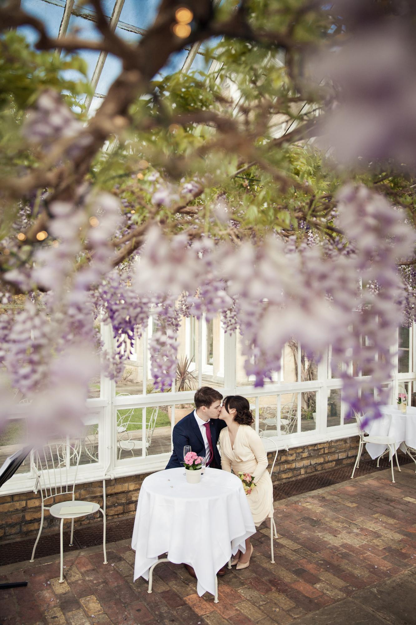 conservatory st julians club wisteria photo