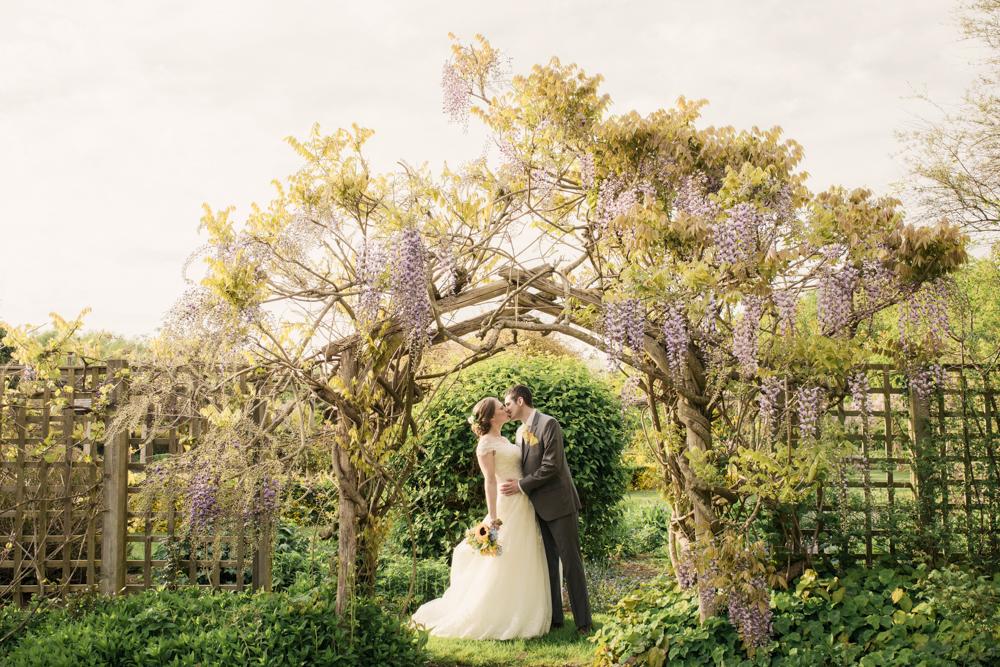 the gardens yalding wisteria